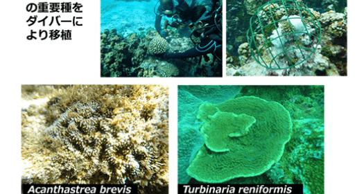 写真:サンゴ保全計画