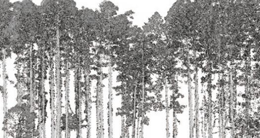 写真:森林計測
