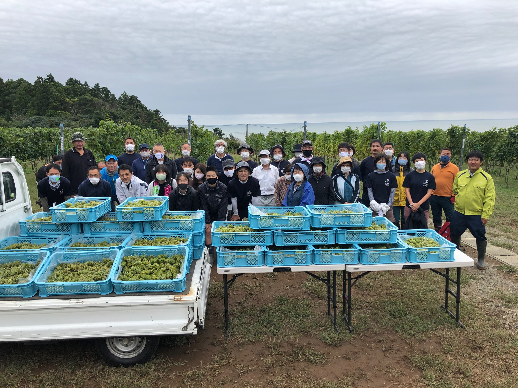 【CSR活動】とみおかワイン収穫の画像