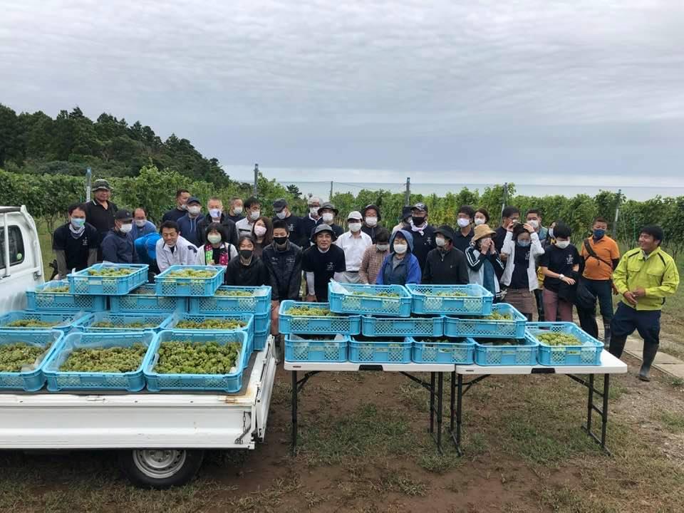 富岡で初のシャルドネ収穫そして山梨での醸造準備の画像